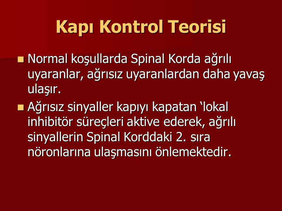 Kapı Kontrol Teorisi Normal koşullarda Spinal Korda ağrılı uyaranlar, ağrısız uyaranlardan daha yavaş ulaşır. Normal koşullarda Spinal Korda ağrılı uy