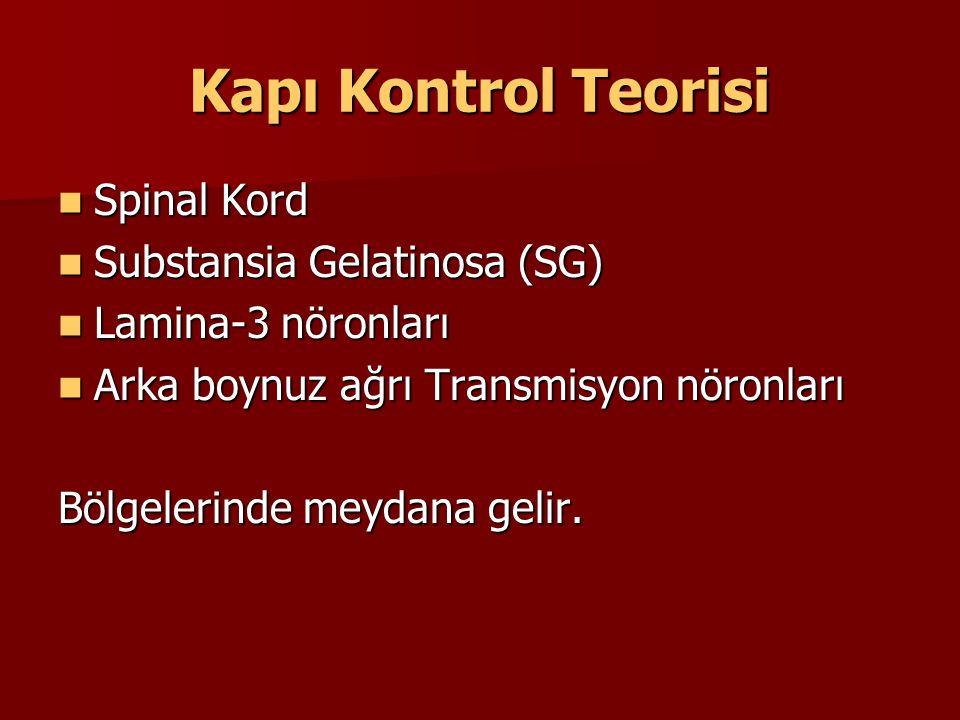 Kapı Kontrol Teorisi Spinal Kord Spinal Kord Substansia Gelatinosa (SG) Substansia Gelatinosa (SG) Lamina-3 nöronları Lamina-3 nöronları Arka boynuz a