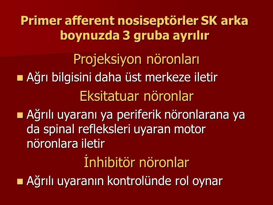 Primer afferent nosiseptörler SK arka boynuzda 3 gruba ayrılır Projeksiyon nöronları Ağrı bilgisini daha üst merkeze iletir Ağrı bilgisini daha üst me