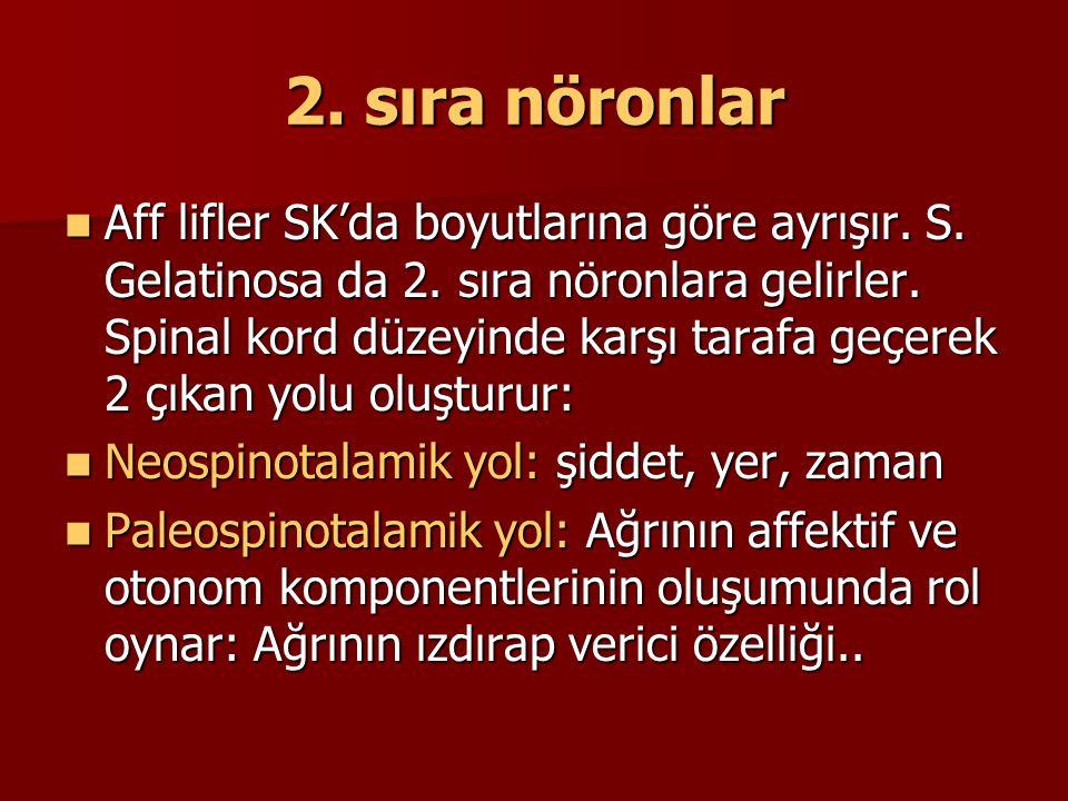 2. sıra nöronlar Aff lifler SK'da boyutlarına göre ayrışır. S. Gelatinosa da 2. sıra nöronlara gelirler. Spinal kord düzeyinde karşı tarafa geçerek 2