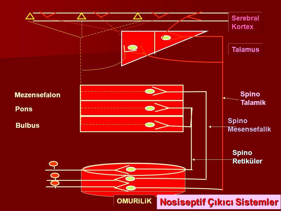 Spino Talamik Spino Retiküler Spino Mesensefalik OMURiLiK Bulbus Mezensefalon Pons Nosiseptif Çıkıcı Sistemler Serebral Kortex Talamus