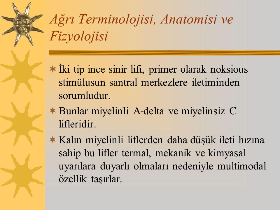 Ağrı Terminolojisi, Anatomisi ve Fizyolojisi  İki tip ince sinir lifi, primer olarak noksious stimülusun santral merkezlere iletiminden sorumludur. 