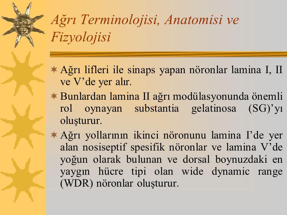 Ağrı Terminolojisi, Anatomisi ve Fizyolojisi  Ağrı lifleri ile sinaps yapan nöronlar lamina I, II ve V'de yer alır.  Bunlardan lamina II ağrı modüla