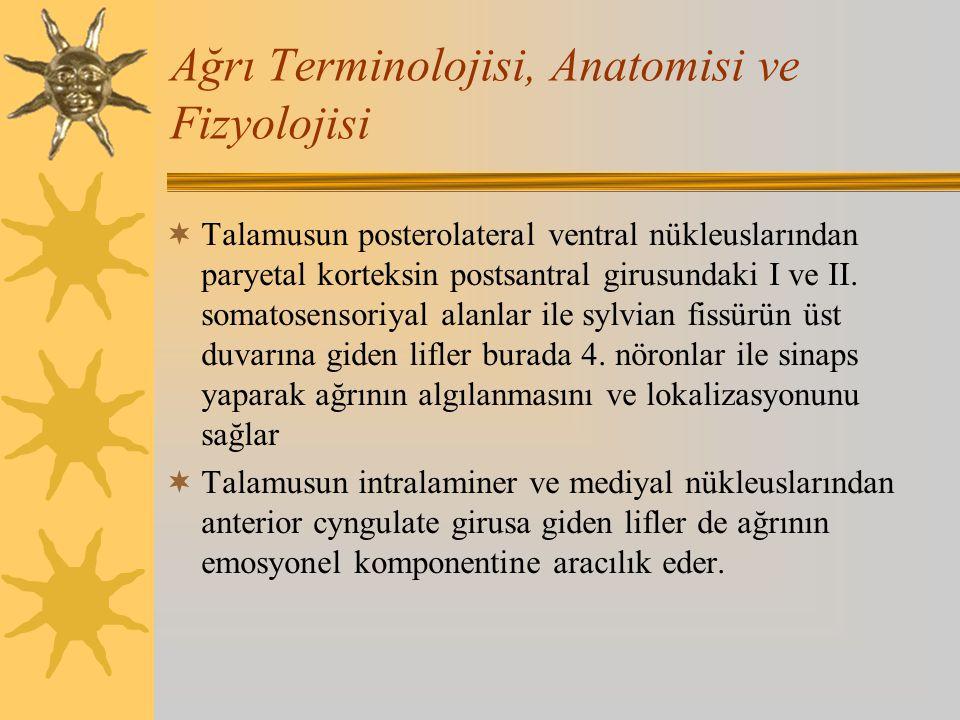 Ağrı Terminolojisi, Anatomisi ve Fizyolojisi  Talamusun posterolateral ventral nükleuslarından paryetal korteksin postsantral girusundaki I ve II. so