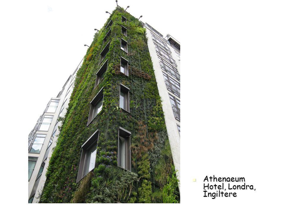 Athenaeum Hotel, Londra, İngiltere Athenaeum Hotel, Londra, İngiltere