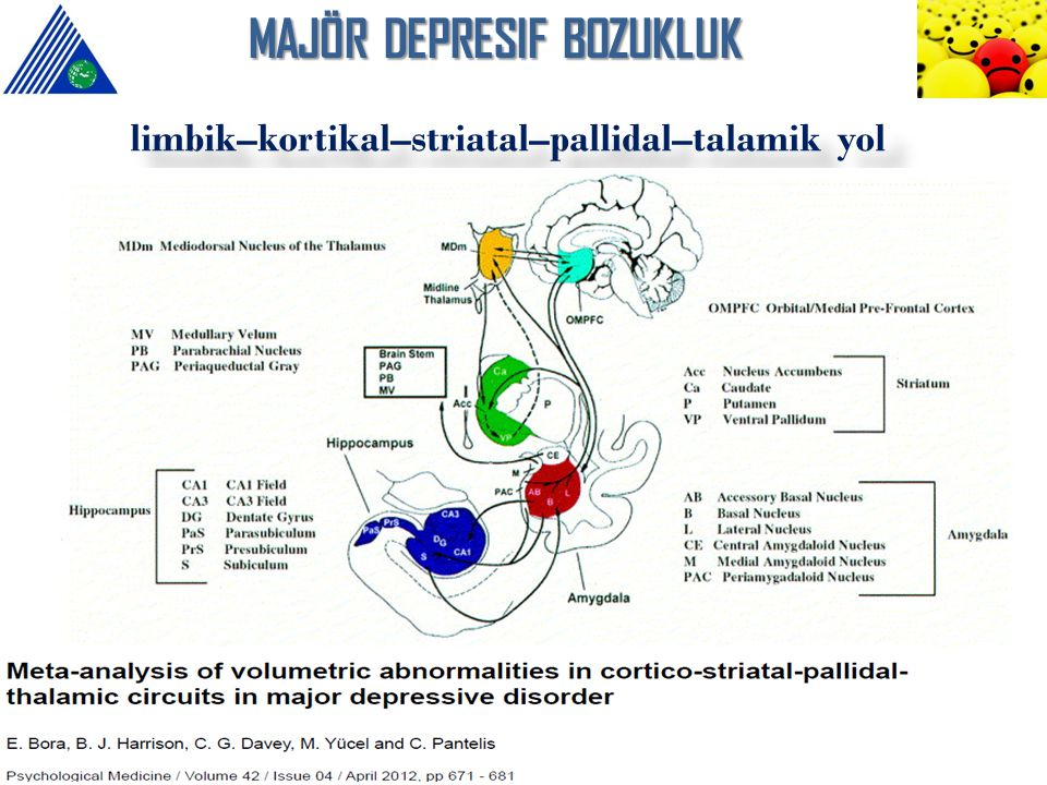 MAJÖR DEPRESIF BOZUKLUK limbik–kortikal–striatal–pallidal–talamik yol