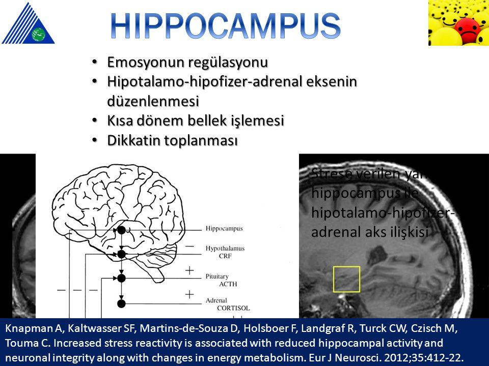 2 yıldan fazla majör depresyonu olanlarda 1'den fazla depresyon ata ğ ı olanlarda 24 depresif kadında bilateral hippocampus hacminde azalma Hippocampus hacminin azalması verbal hafıza ile do ğ ru orantılı Depresyon süresi ~ hippocampus hacminde azalma Depresyon süresi ve hippocampus hacmi arasındaki korelasyon.