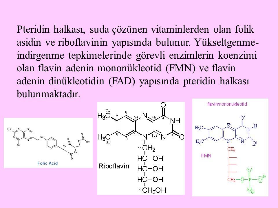 29 Pteridin halkası, suda çözünen vitaminlerden olan folik asidin ve riboflavinin yapısında bulunur. Yükseltgenme- indirgenme tepkimelerinde görevli e