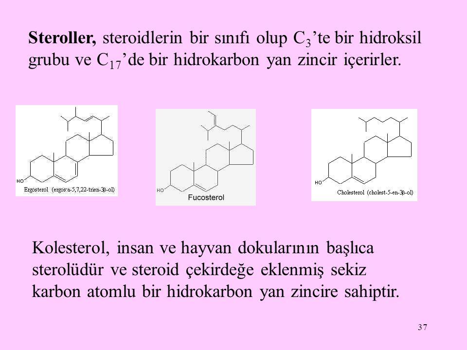 37 Steroller, steroidlerin bir sınıfı olup C 3 'te bir hidroksil grubu ve C 17 'de bir hidrokarbon yan zincir içerirler. Kolesterol, insan ve hayvan d