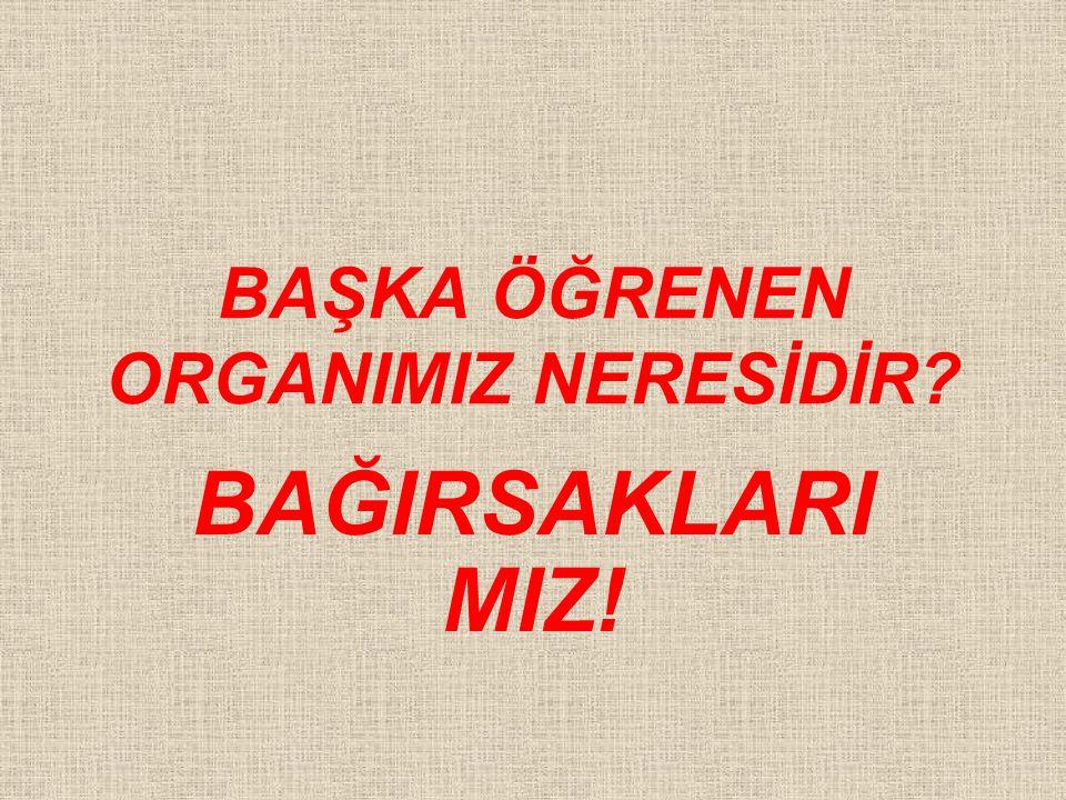BAŞKA ÖĞRENEN ORGANIMIZ NERESİDİR BAĞIRSAKLARI MIZ!