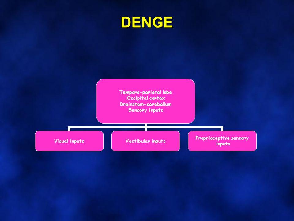 DENGE Temporo-parietal lobe Occipital cortex Brainstem-cerebellum Sensory inputs Visual inputsVestibular inputs Proprioceptive sensory inputs