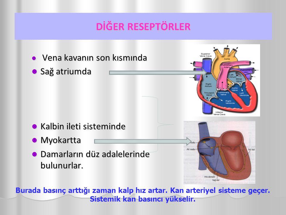 DİĞER RESEPTÖRLER Vena kavanın son kısmında Vena kavanın son kısmında Sağ atriumda Sağ atriumda Kalbin ileti sisteminde Kalbin ileti sisteminde Myokartta Myokartta Damarların düz adalelerinde bulunurlar.