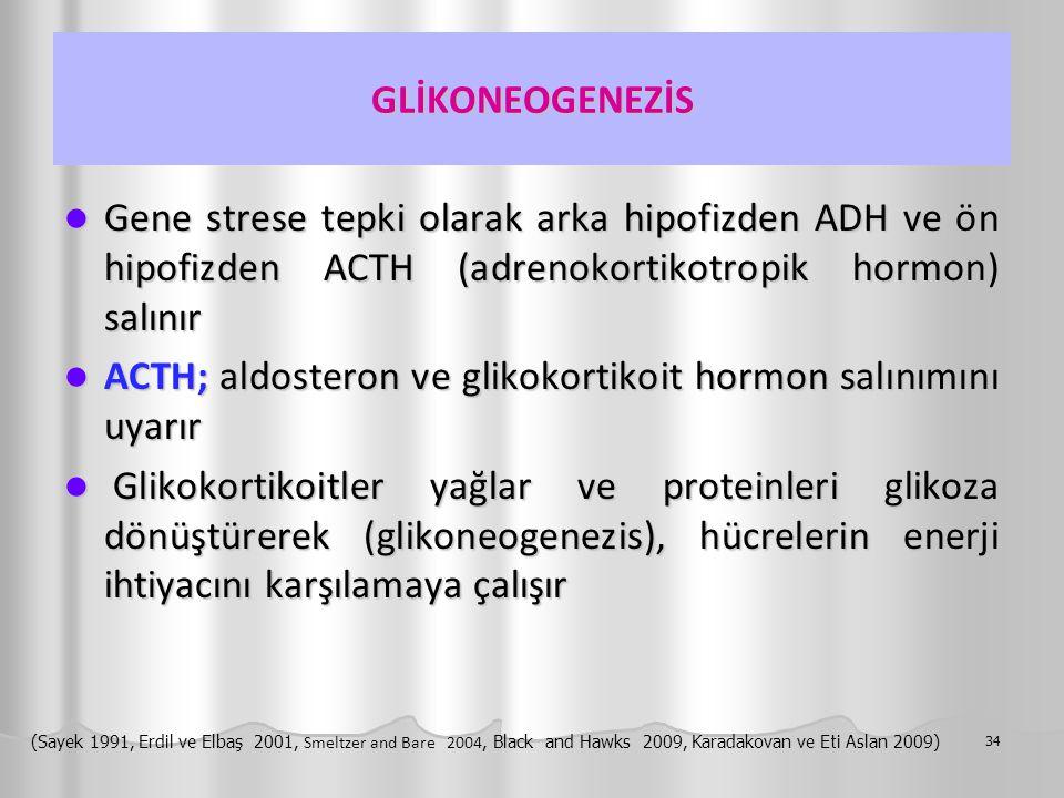 GLİKONEOGENEZİS Gene strese tepki olarak arka hipofizden ADH ve ön hipofizden ACTH (adrenokortikotropik hormon) salınır Gene strese tepki olarak arka hipofizden ADH ve ön hipofizden ACTH (adrenokortikotropik hormon) salınır ACTH; aldosteron ve glikokortikoit hormon salınımını uyarır ACTH; aldosteron ve glikokortikoit hormon salınımını uyarır Glikokortikoitler yağlar ve proteinleri glikoza dönüştürerek (glikoneogenezis), hücrelerin enerji ihtiyacını karşılamaya çalışır Glikokortikoitler yağlar ve proteinleri glikoza dönüştürerek (glikoneogenezis), hücrelerin enerji ihtiyacını karşılamaya çalışır 34 (Sayek 1991, Erdil ve Elbaş 2001, Smeltzer and Bare 2004, Black and Hawks 2009, Karadakovan ve Eti Aslan 2009)
