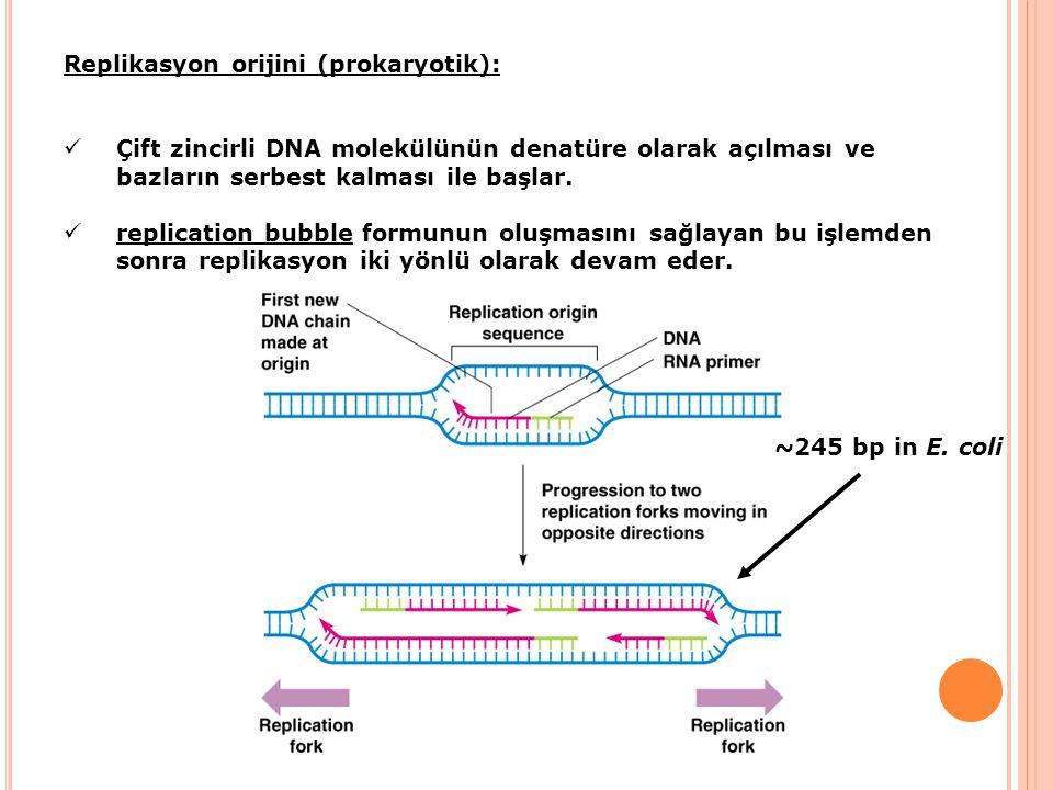 Replikasyon orijini (prokaryotik): Çift zincirli DNA molekülünün denatüre olarak açılması ve bazların serbest kalması ile başlar. replication bubble f