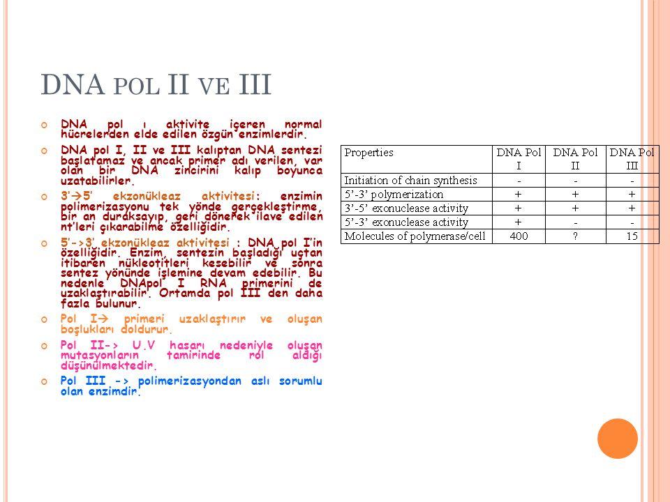 DNA POL II VE III DNA pol ı aktivite içeren normal hücrelerden elde edilen özgün enzimlerdir. DNA pol I, II ve III kalıptan DNA sentezi başlatamaz ve