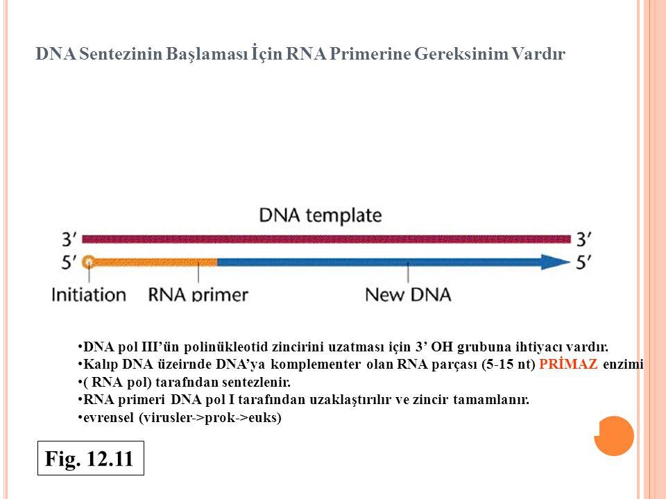 DNA Sentezinin Başlaması İçin RNA Primerine Gereksinim Vardır DNA pol III'ün polinükleotid zincirini uzatması için 3' OH grubuna ihtiyacı vardır. Kalı