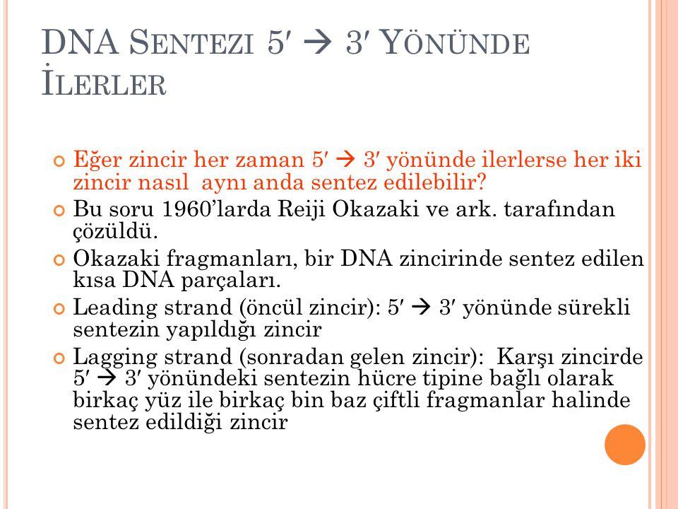 DNA S ENTEZI 5′  3′ Y ÖNÜNDE İ LERLER Eğer zincir her zaman 5′  3′ yönünde ilerlerse her iki zincir nasıl aynı anda sentez edilebilir? Bu soru 1960'