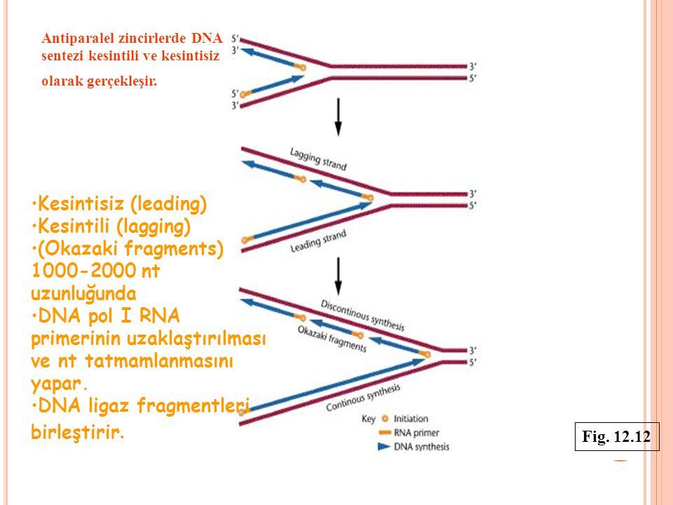 Antiparalel zincirlerde DNA sentezi kesintili ve kesintisiz olarak gerçekleşir. Kesintisiz (leading) Kesintili (lagging) (Okazaki fragments) 1000-2000