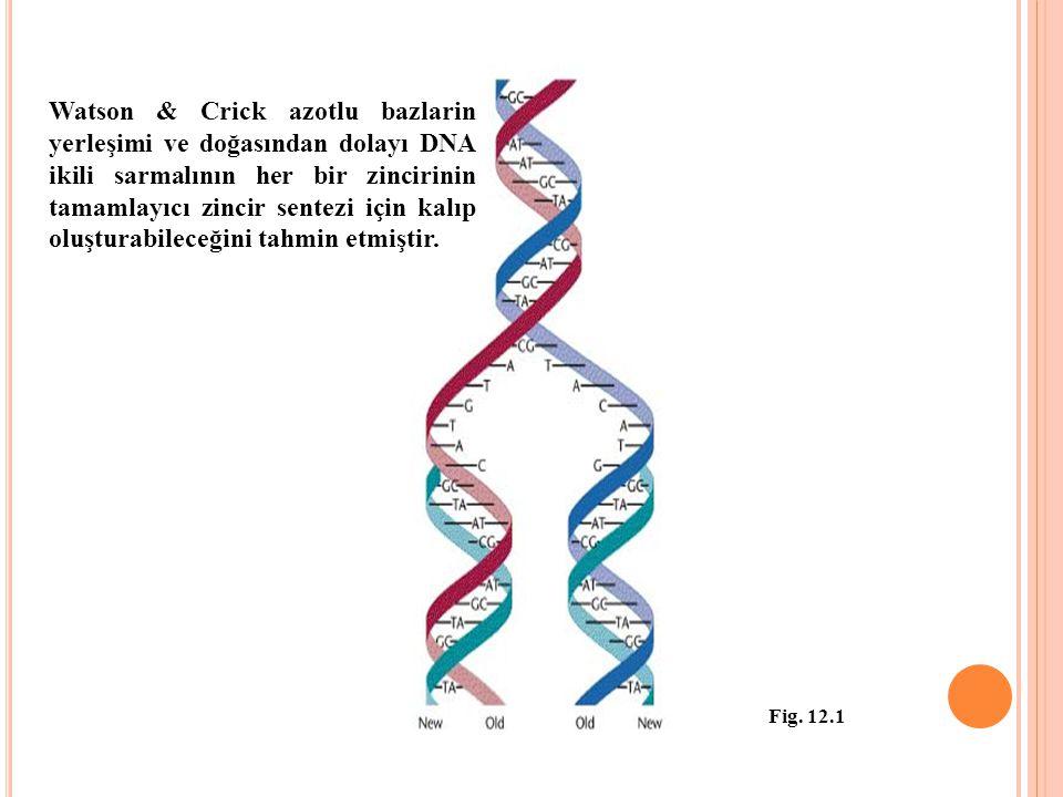 Watson & Crick azotlu bazlarin yerleşimi ve doğasından dolayı DNA ikili sarmalının her bir zincirinin tamamlayıcı zincir sentezi için kalıp oluşturabi