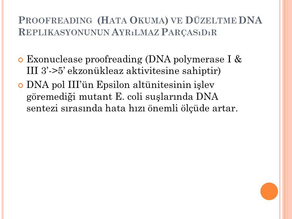 P ROOFREADING (H ATA O KUMA ) VE D ÜZELTME DNA R EPLIKASYONUNUN A YRıLMAZ P ARÇASıDıR Exonuclease proofreading (DNA polymerase I & III 3'->5' ekzonükl