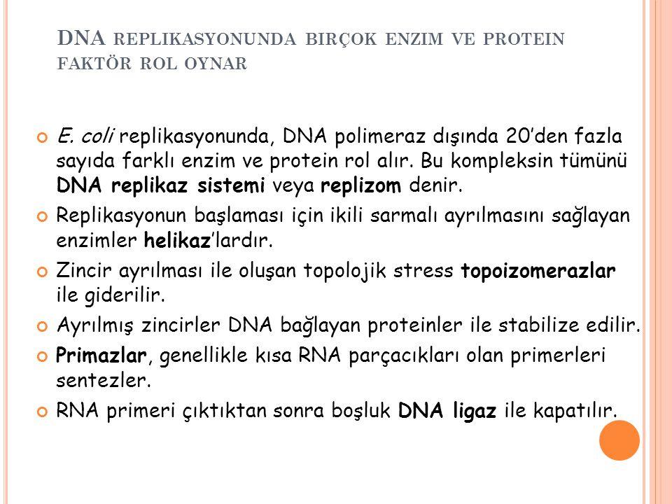 DNA REPLIKASYONUNDA BIRÇOK ENZIM VE PROTEIN FAKTÖR ROL OYNAR E. coli replikasyonunda, DNA polimeraz dışında 20'den fazla sayıda farklı enzim ve protei