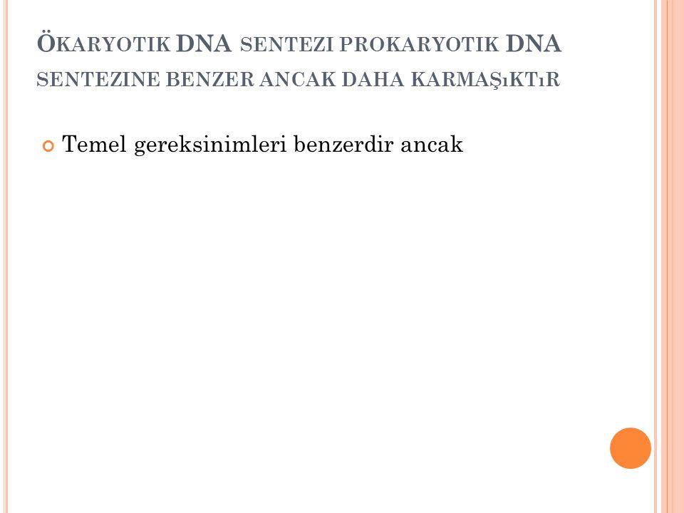 Ö KARYOTIK DNA SENTEZI PROKARYOTIK DNA SENTEZINE BENZER ANCAK DAHA KARMAŞıKTıR Temel gereksinimleri benzerdir ancak