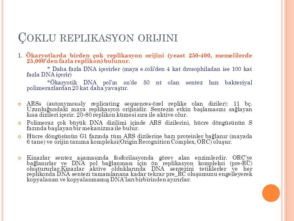 Ç OKLU REPLIKASYON ORIJINI 1. Ökaryotlarda birden çok replikasyon orijini (yeast 250-400, memelilerde 25,000'den fazla replikon) bulunur. * Daha fazla