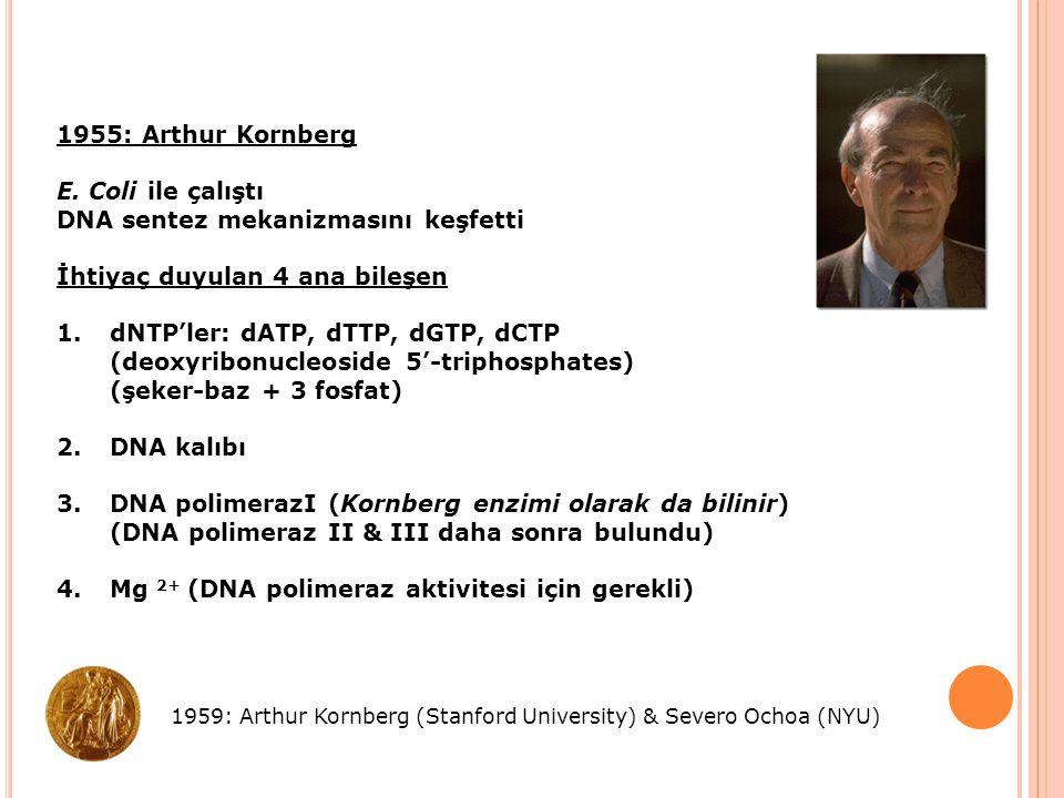 1955: Arthur Kornberg E. Coli ile çalıştı DNA sentez mekanizmasını keşfetti İhtiyaç duyulan 4 ana bileşen 1.dNTP'ler: dATP, dTTP, dGTP, dCTP (deoxyrib