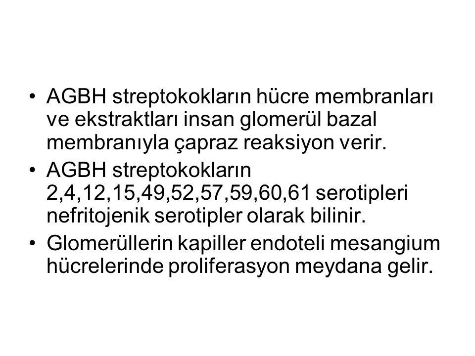 AGBH streptokokların hücre membranları ve ekstraktları insan glomerül bazal membranıyla çapraz reaksiyon verir. AGBH streptokokların 2,4,12,15,49,52,5