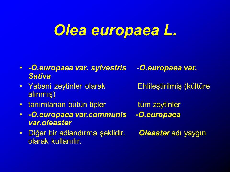 Olea europaea L.-O.europaea var. sylvestris -O.europaea var.