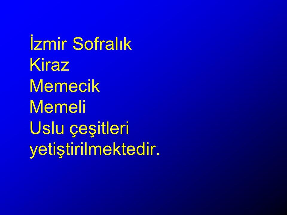 İzmir Sofralık Kiraz Memecik Memeli Uslu çeşitleri yetiştirilmektedir.