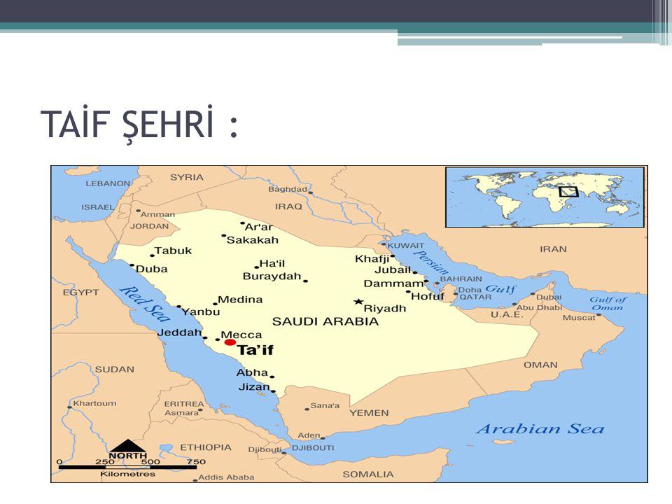 TAİF ŞEHRİ :