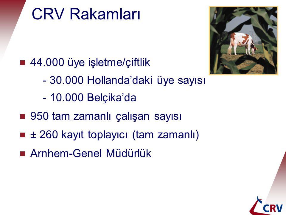 CRV Rakamları  44.000 üye işletme/çiftlik - 30.000 Hollanda'daki üye sayısı - 10.000 Belçika'da  950 tam zamanlı çalışan sayısı  ± 260 kayıt toplayıcı (tam zamanlı)  Arnhem-Genel Müdürlük