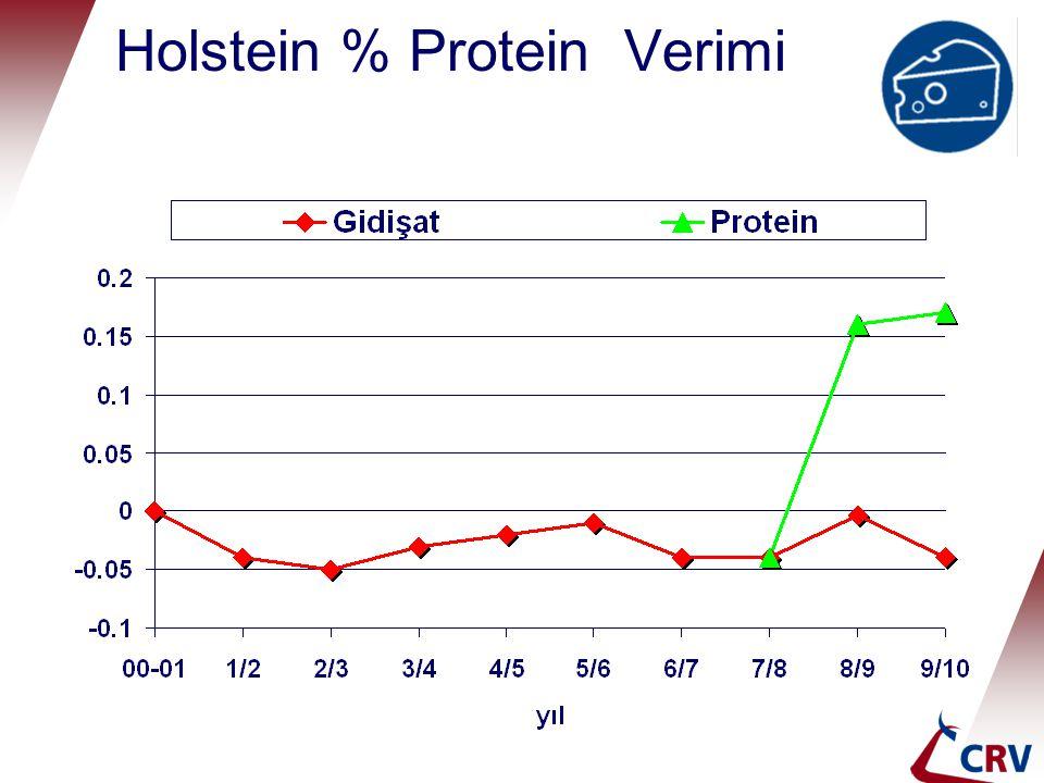Holstein % Protein Verimi