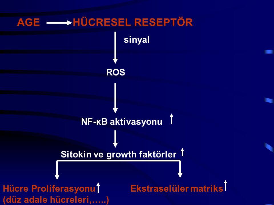 AGE HÜCRESEL RESEPTÖR sinyal ROS NF-κB aktivasyonu Sitokin ve growth faktörler Hücre Proliferasyonu Ekstraselüler matriks (düz adale hücreleri,…..)