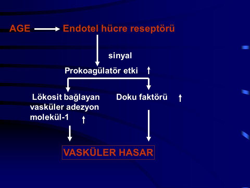 AGE Endotel hücre reseptörü sinyal Prokoagülatör etki Lökosit bağlayan Doku faktörü vasküler adezyon molekül-1 VASKÜLER HASAR