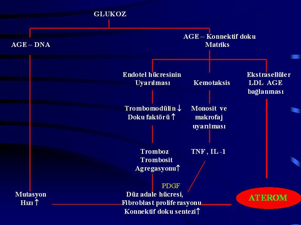DM`da Makrovasküler Hastalık Patogenezi LDL , VLDL , Trigliserit , HDL  –Makrofajlar LD'yi alır ve köpük hücrelerine dönüşür.