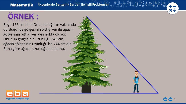 5 Boyu 155 cm olan Onur, bir ağacın yakınında durduğunda gölgesinin bittiği yer ile ağacın gölgesinin bittiği yer aynı nokta oluyor.