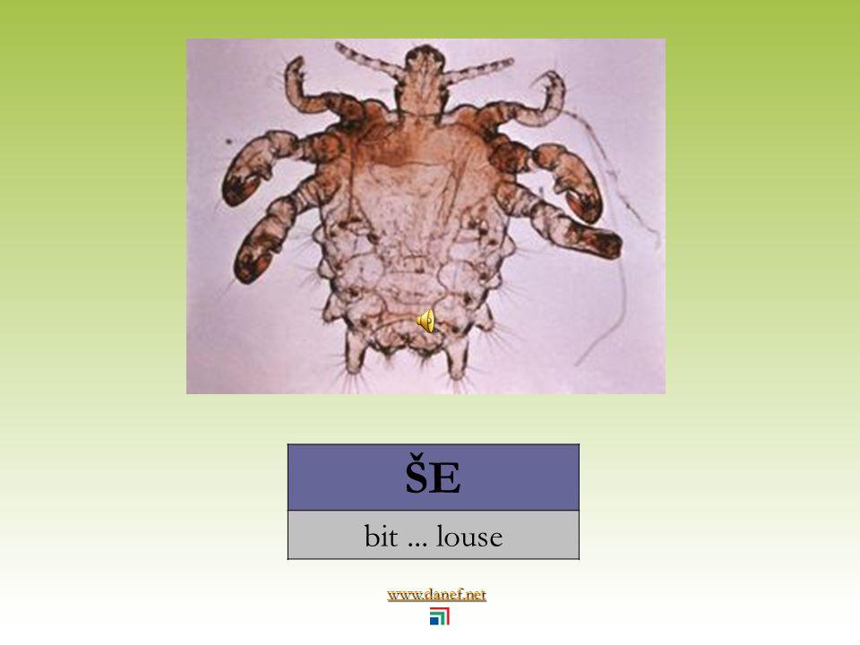 www.danef.net ŞÖM Ṕ EJ hamam böceği... cockroach
