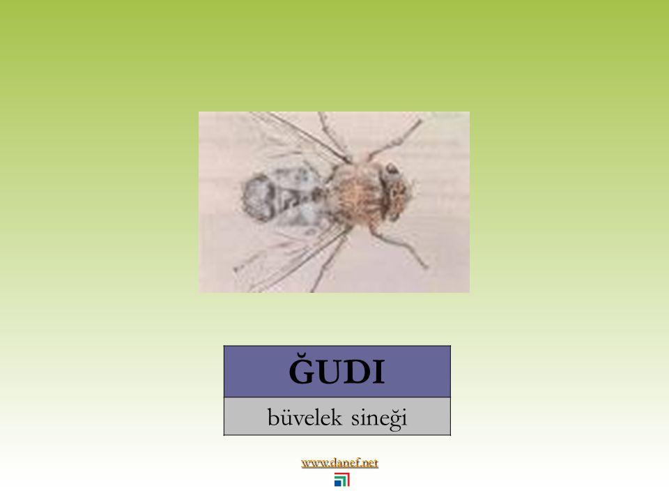 www.danef.net ĞOÁNEDES tahtakurusu... bug