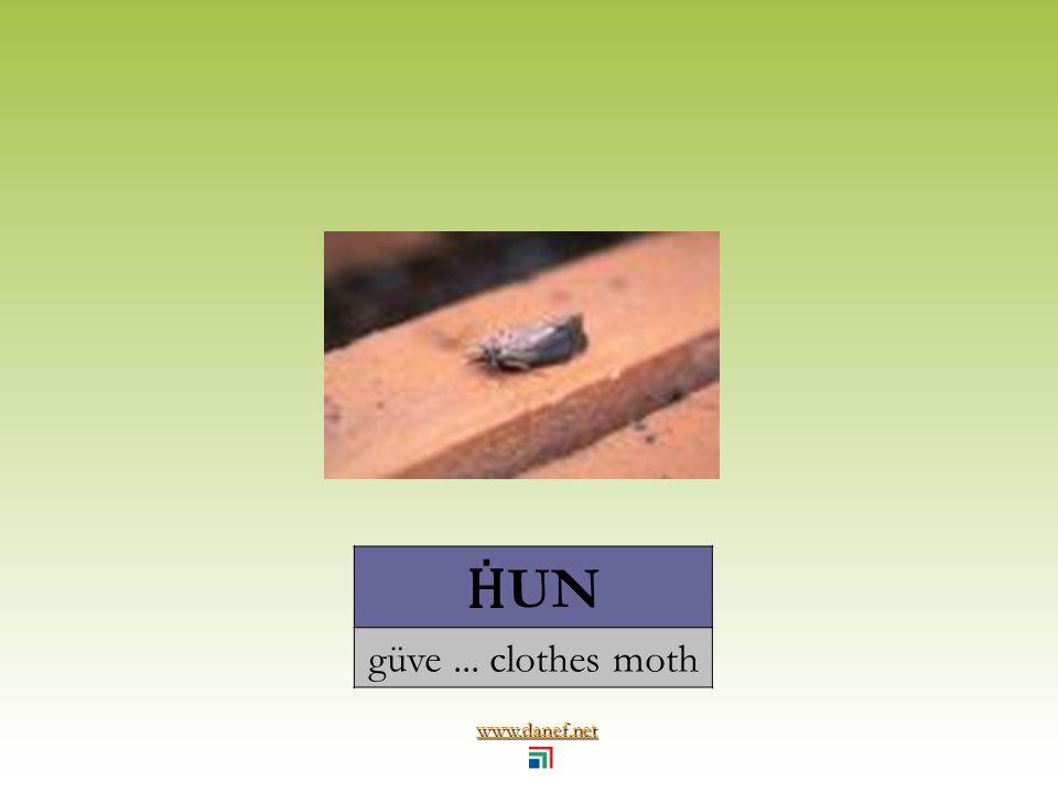 www.danef.net CINEP Ḣ OTER midye... mussel