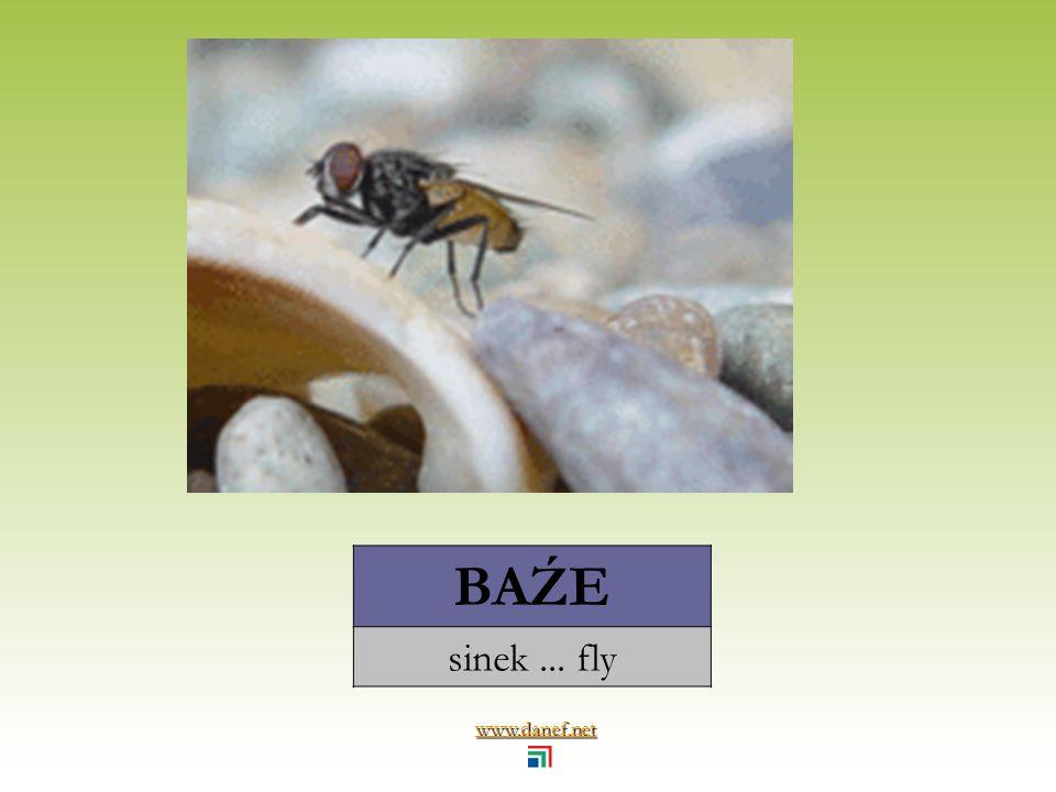 www.danef.net ARĞOY sivrisinek... mosquito
