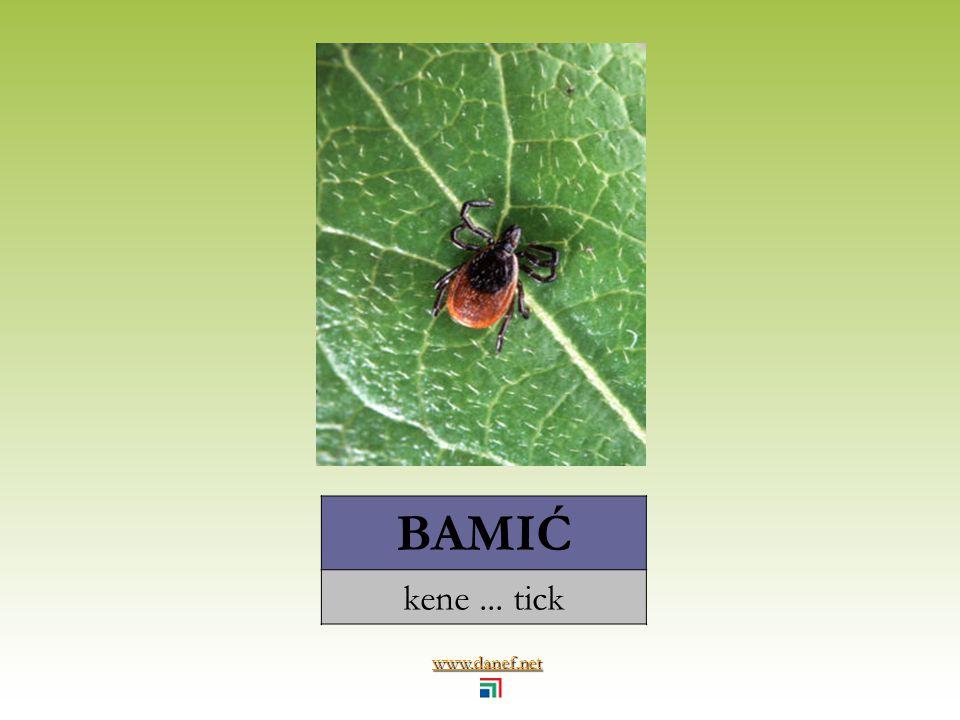 www.danef.net BAŹE sinek... fly