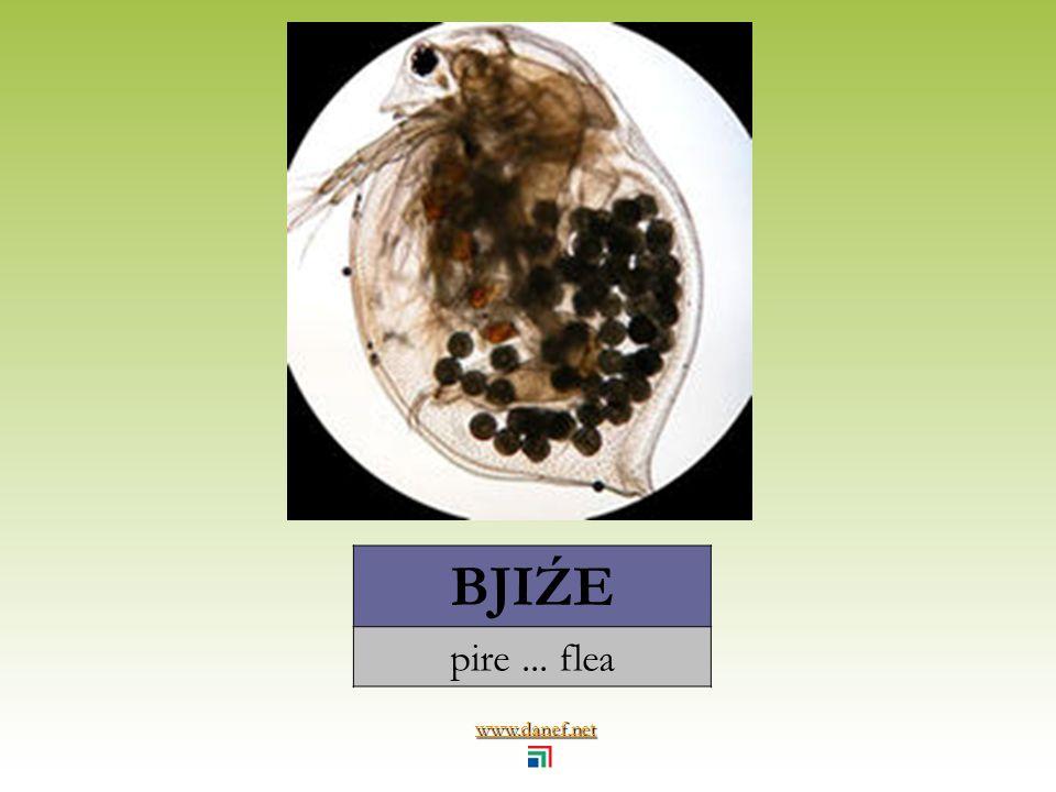 www.danef.net BJE balarısı... honeybee