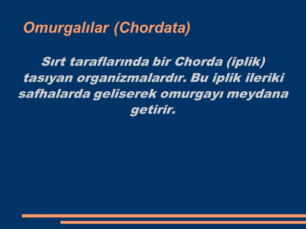 Omurgalılar (Chordata) Sırt taraflarında bir Chorda (iplik) tasıyan organizmalardır. Bu iplik ileriki safhalarda geliserek omurgayı meydana getirir.