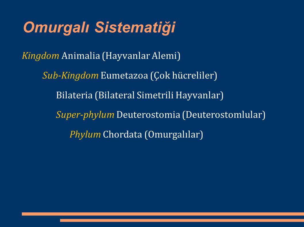 Omurgalı Sistematiği Phylum Chordata (Omurgalılar) Acrania (Kafatassızlar) Craniata (Kafataslılar) Hemichordata (Yarıkordalılar) Urochordata (Kuyruğu Kordalılar) Cephalochordata (Başı Kordalılar) Agnatha (Çenesizler) Gnathostomata (Çeneliler) *Pisces (Balıklar) *Amphibia (İki Yaşamlılar) *Reptilia (Sürüngenler) *Aves (Kuslar) *Mammalia (Memeliler)