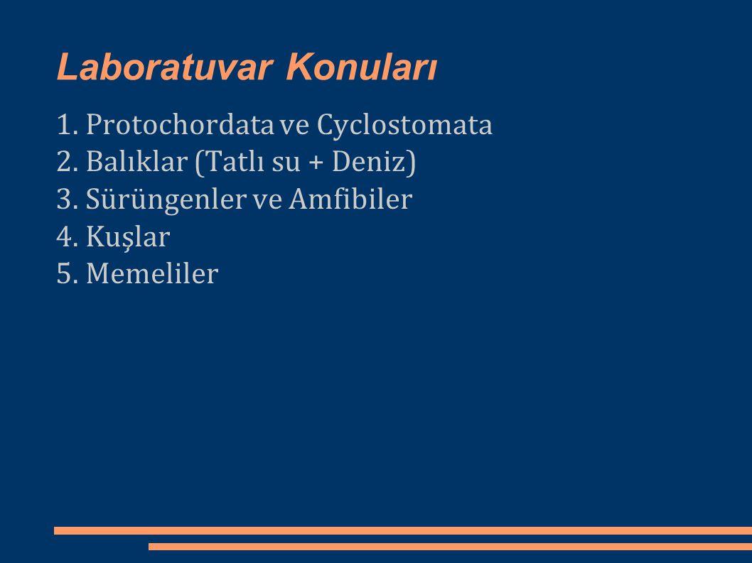 Laboratuvar Konuları 1. Protochordata ve Cyclostomata 2. Balıklar (Tatlı su + Deniz) 3. Sürüngenler ve Amfibiler 4. Kuşlar 5. Memeliler
