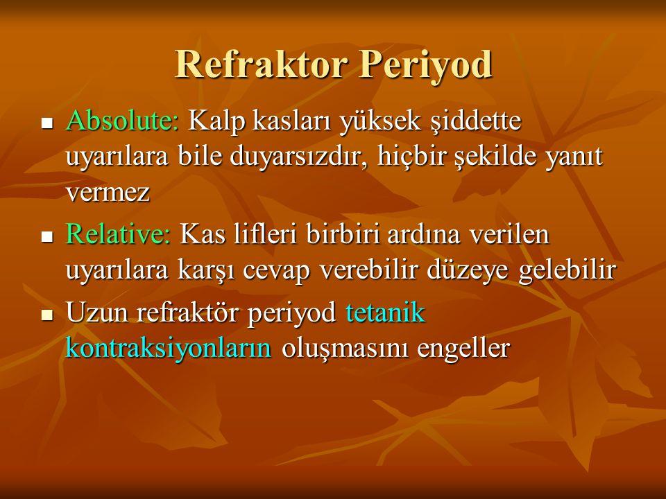 Refraktor Periyod Absolute: Kalp kasları yüksek şiddette uyarılara bile duyarsızdır, hiçbir şekilde yanıt vermez Absolute: Kalp kasları yüksek şiddett