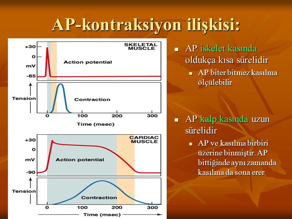 AP-kontraksiyon ilişkisi: AP iskelet kasında oldukça kısa sürelidir AP iskelet kasında oldukça kısa sürelidir AP biter bitmez kasılma ölçülebilir AP k