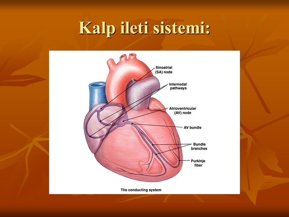 Kalp ileti sistemi: